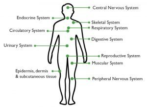 Your body has many systems